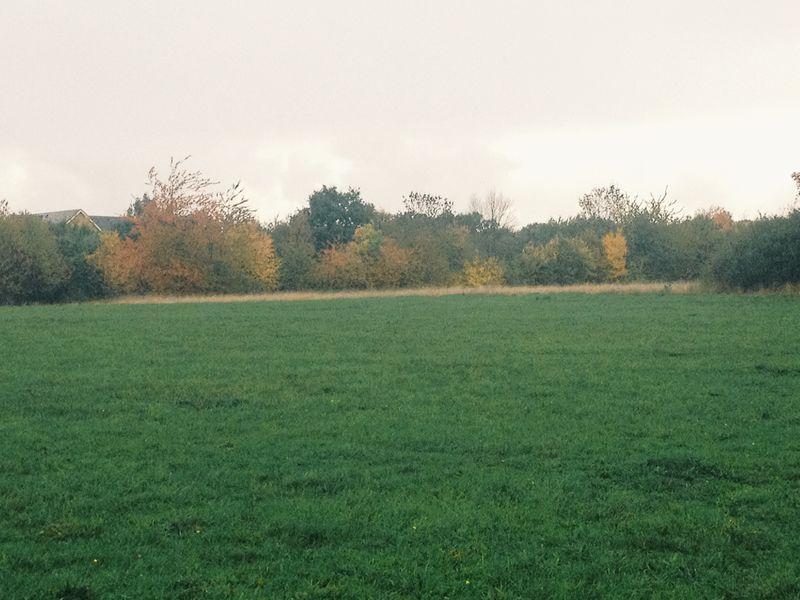 Autumnal_field
